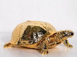 Turtle Box Gold